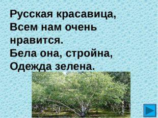 Русская красавица, Всем нам очень нравится. Бела она, стройна, Одежда зелена. ?