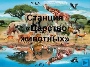 Станция «Царство животных»