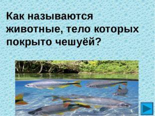 Как называются животные, тело которых покрыто чешуёй? ?