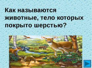 Как называются животные, тело которых покрыто шерстью? ?