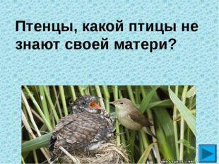 Птенцы, какой птицы не знают своей матери? ?