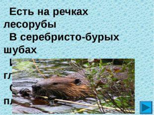 Есть на речках лесорубы  В серебристо-бурых шубах Из деревьев, веток, глин