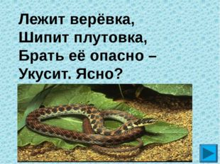 Лежит верёвка,  Шипит плутовка, Брать её опасно –  Укусит. Ясно? ?