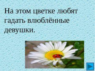 На этом цветке любят гадать влюблённые девушки. ?