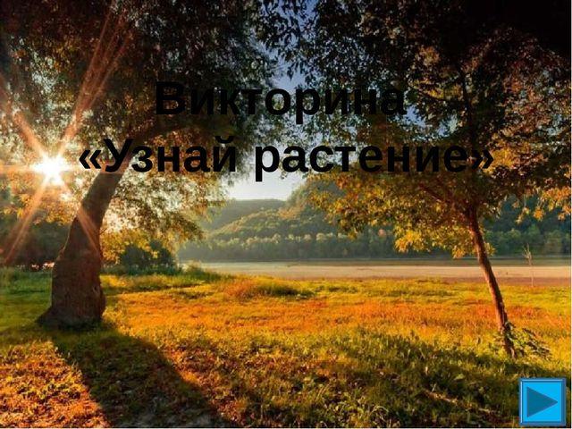 Викторина «Узнай растение»
