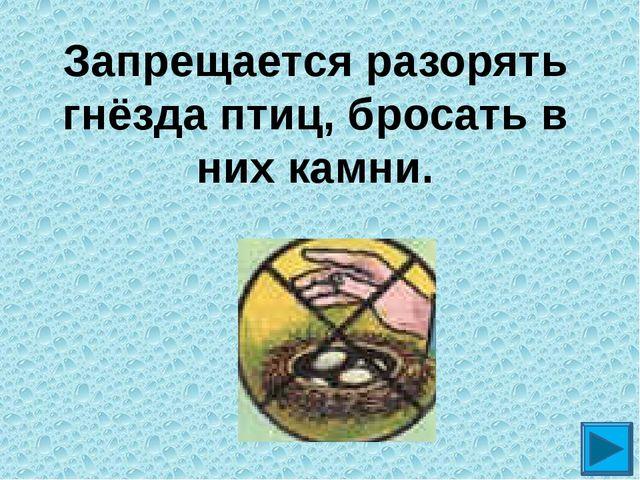 Запрещается разорять гнёзда птиц, бросать в них камни.