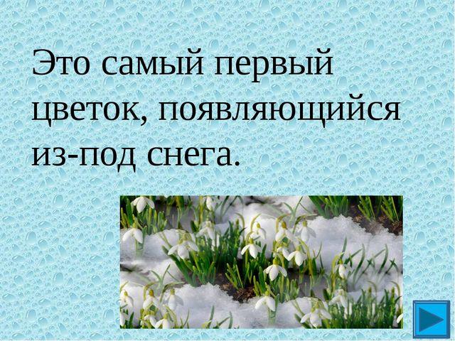 Это самый первый цветок, появляющийся из-под снега. ?
