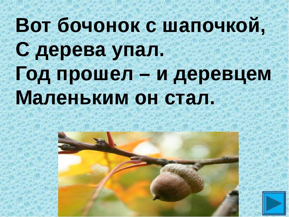 Вот бочонок с шапочкой, С дерева упал. Год прошел – и деревцем Маленьким он с...