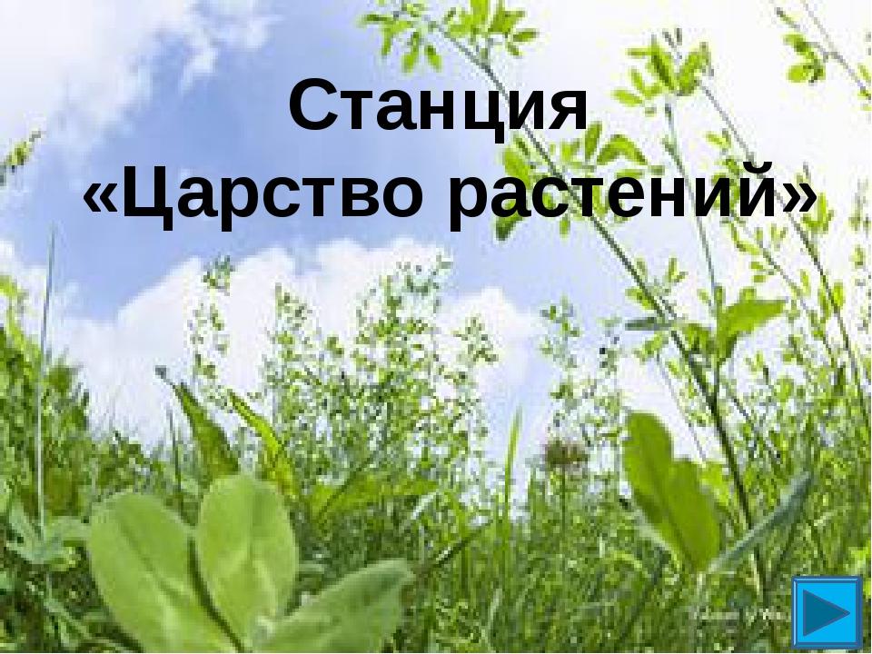 Станция «Царство растений»