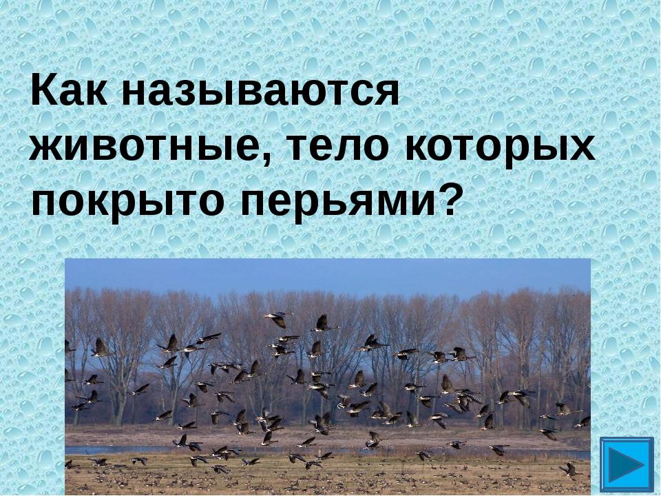 Как называются животные, тело которых покрыто перьями? ?