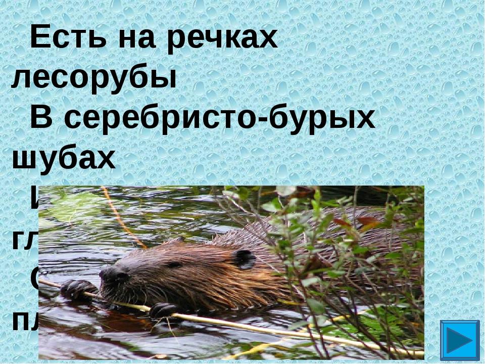 Есть на речках лесорубы  В серебристо-бурых шубах Из деревьев, веток, глин...