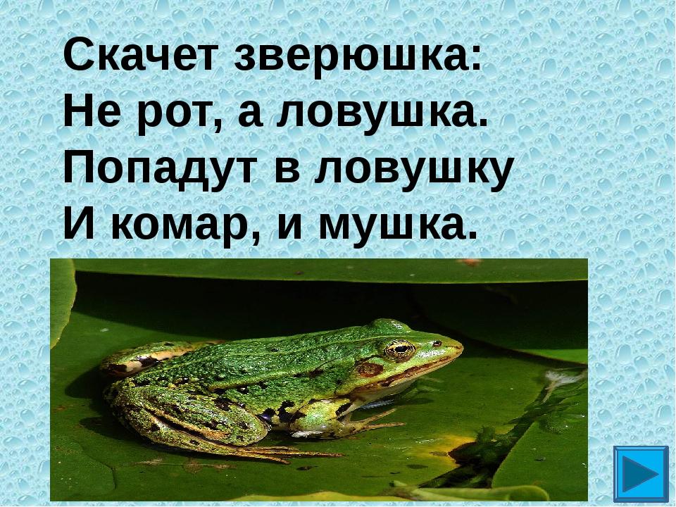 Скачет зверюшка: Не рот, а ловушка. Попадут в ловушку И комар, и мушка. ?