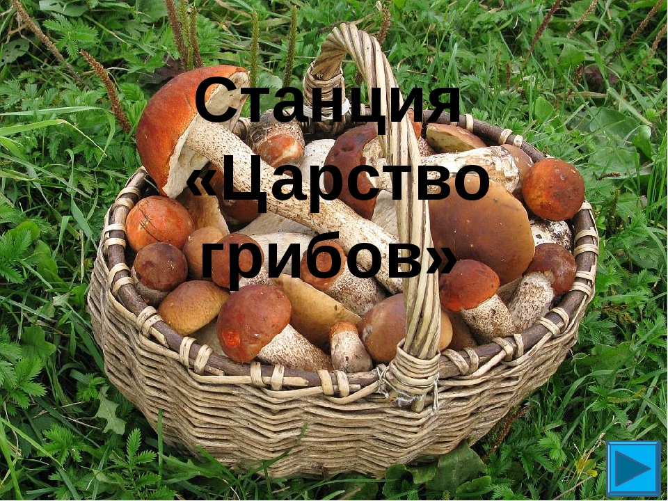 Станция «Царство грибов»
