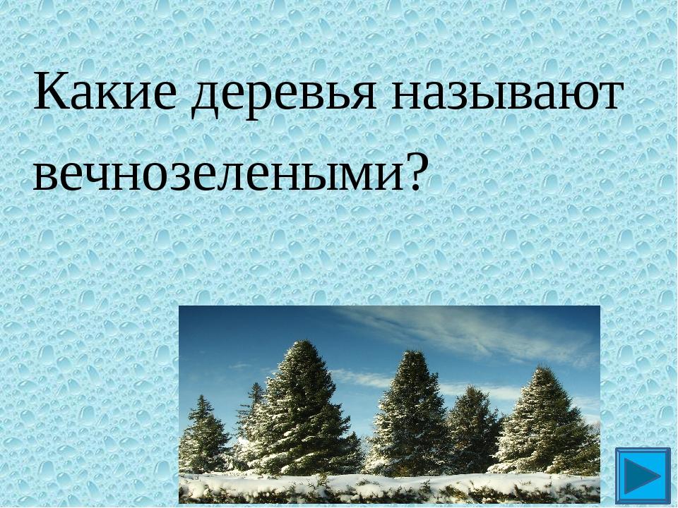Какие деревья называют вечнозелеными? ?