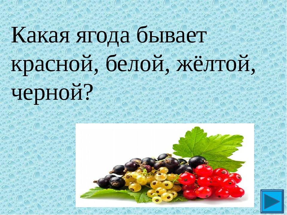 Какая ягода бывает красной, белой, жёлтой, черной? ?