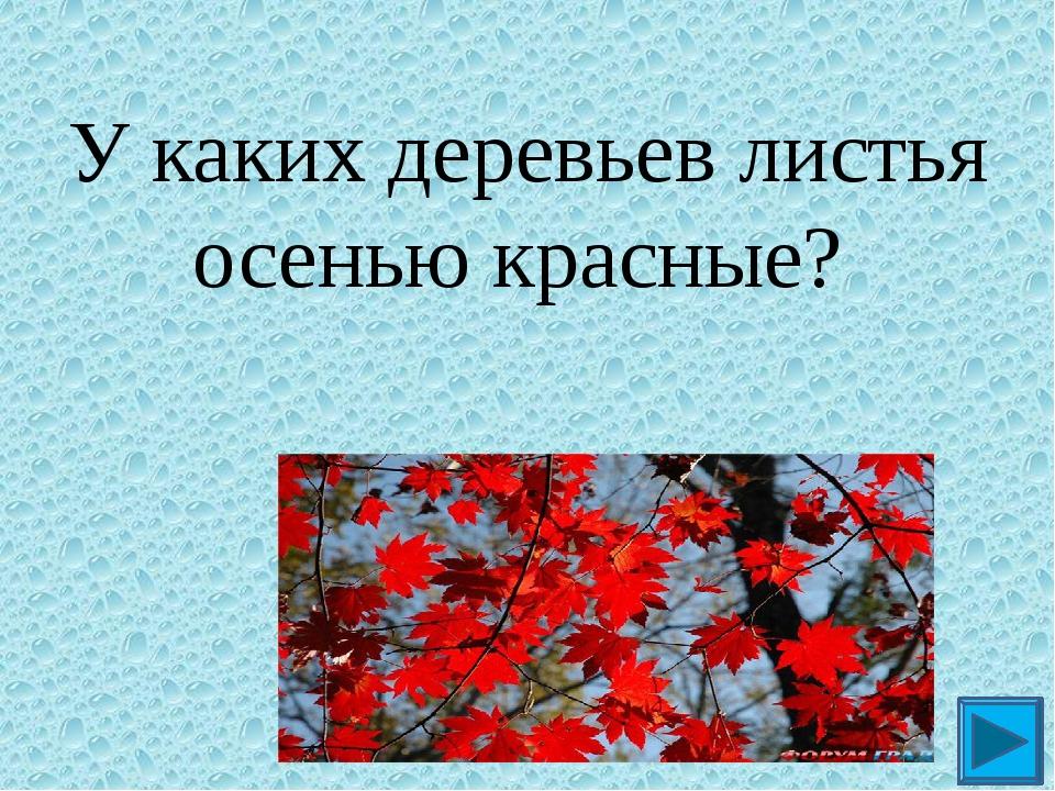 У каких деревьев листья осенью красные? ?