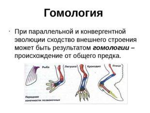 Гомология При параллельной и конвергентной эволюции сходство внешнего строени
