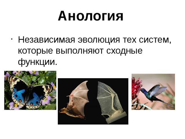 Анология Независимая эволюция тех систем, которые выполняют сходные функции.