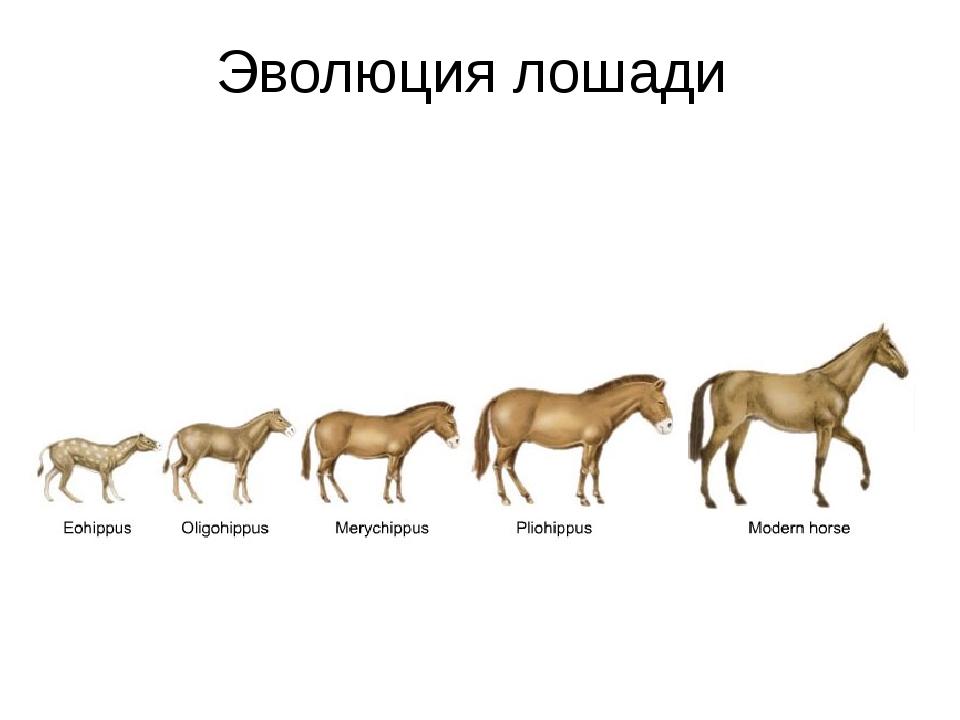 Эволюция лошади