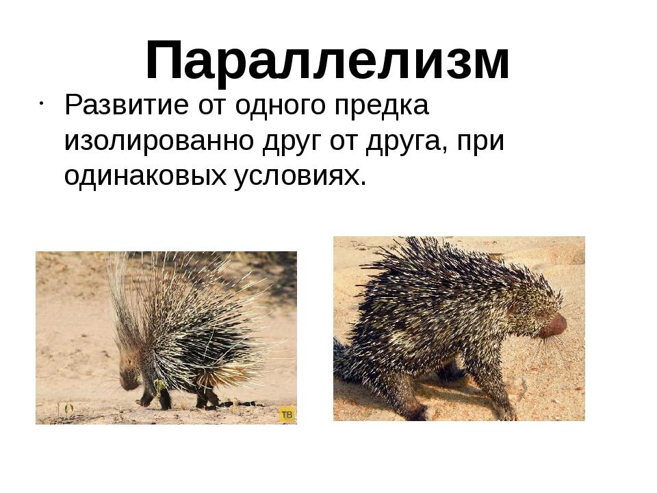 russkie-provintsialki-golie-foto