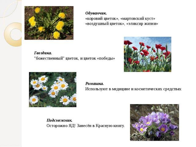 Одуванчик. «коровий цветок», «мартовский куст» «воздушный цветок», «эликсир ж...
