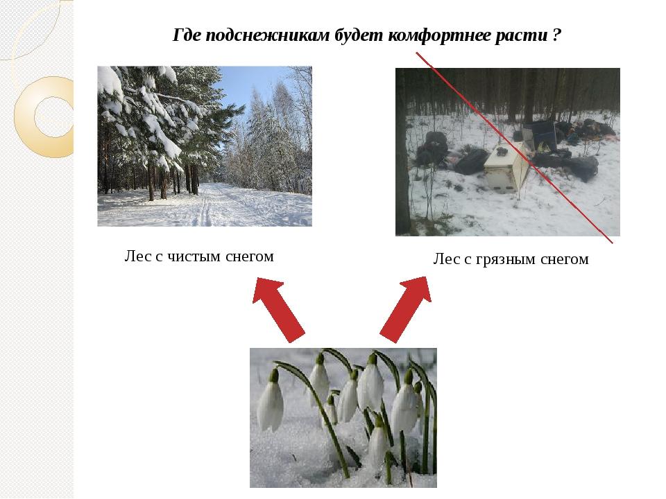 Где подснежникам будет комфортнее расти ? Лес с чистым снегом Лес с грязным с...