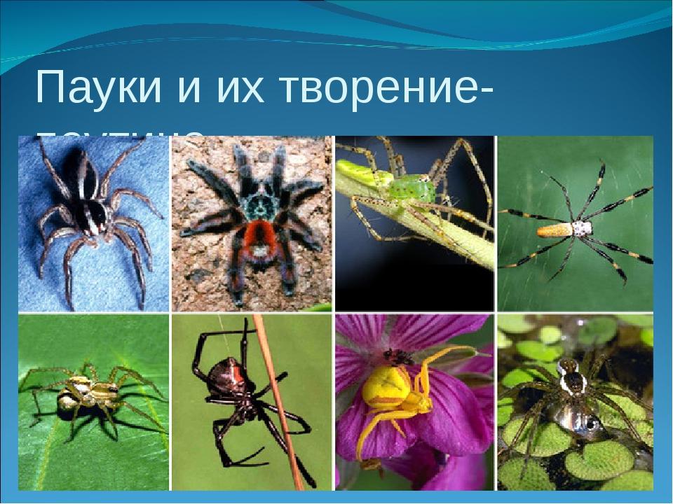 Пауки и их творение- паутина