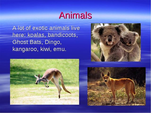 Animals 	A lot of exotic animals live here: koalas, bandicoots, Ghost Bats, D...