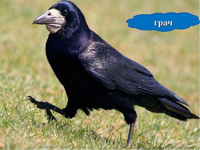* * грач http://www.deti-66.ru/ http://www.deti-66.ru/