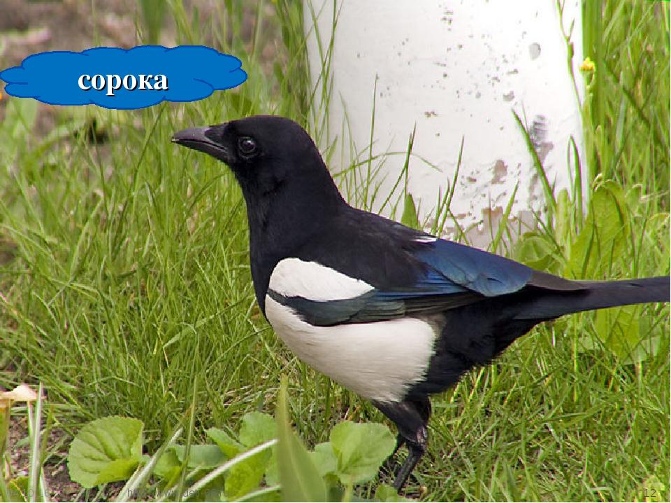 * * сорока http://www.deti-66.ru/ http://www.deti-66.ru/