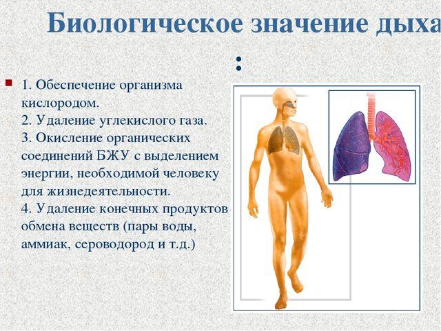 Биологическое значение дыхания: 1. Обеспечение организма кислородом. 2. Удале...