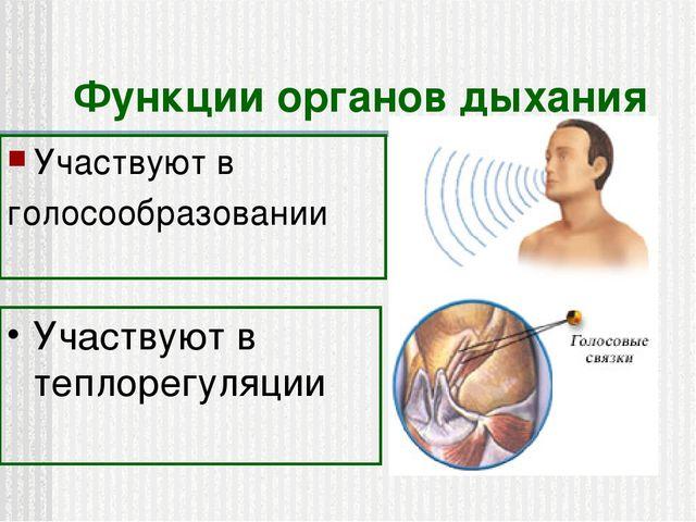 Функции органов дыхания Участвуют в голосообразовании Участвуют в теплорегуля...
