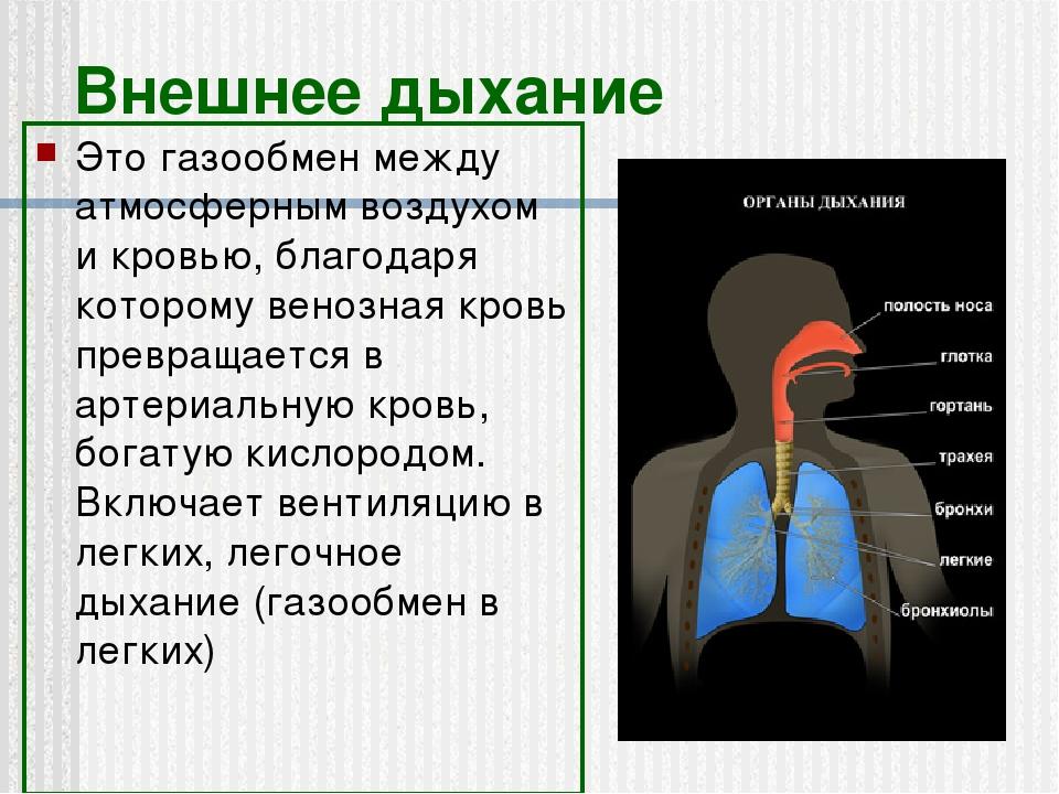 Внешнее дыхание Это газообмен между атмосферным воздухом и кровью, благодаря...