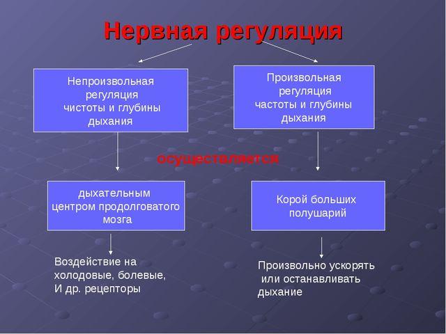 Нервная регуляция Непроизвольная регуляция чистоты и глубины дыхания Произвол...