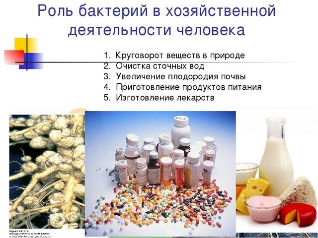 Роль бактерий в хозяйственной деятельности человека Круговорот веществ в прир...