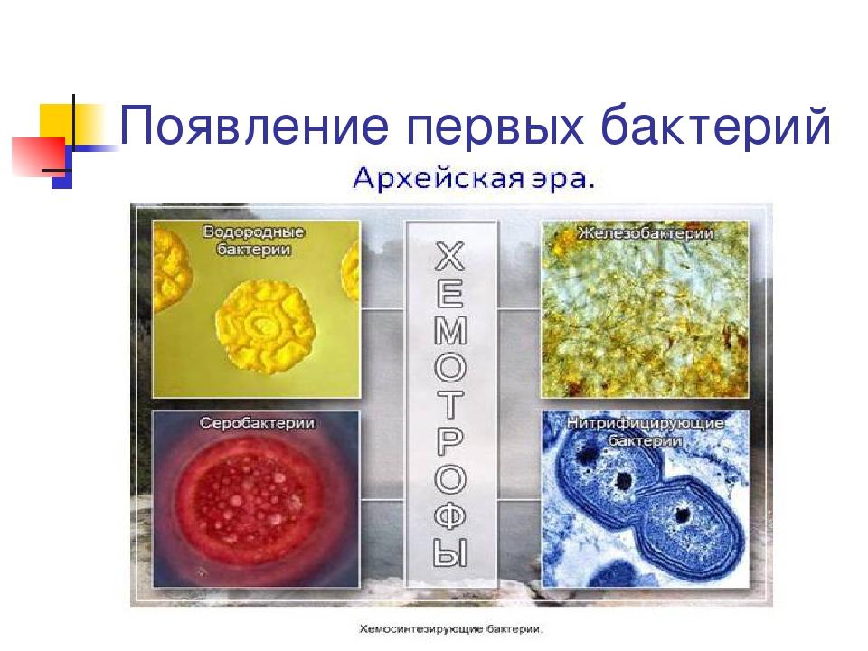 Появление первых бактерий