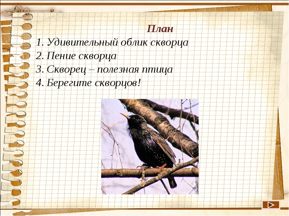 План Удивительный облик скворца Пение скворца Скворец – полезная птица Берег...