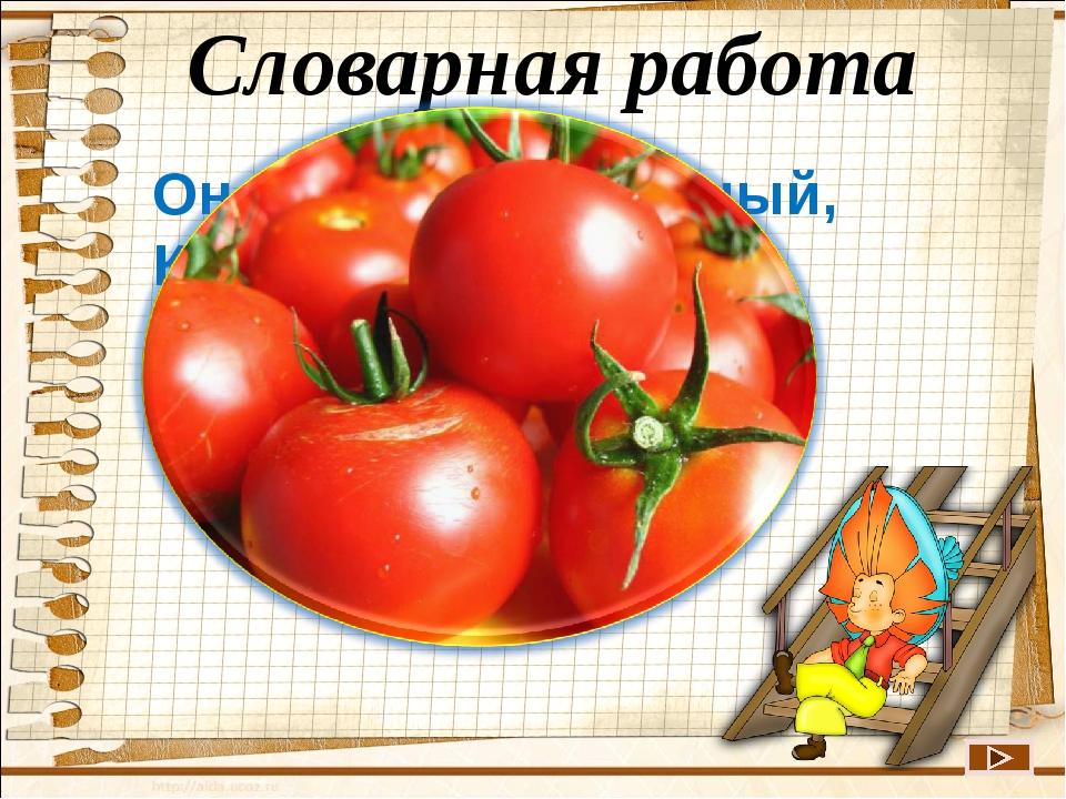Словарная работа  Он круглый и красный, Как глаз светофора. Среди овощей Нет...