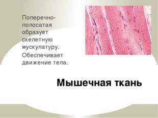 Мышечная ткань Поперечно-полосатая образует скелетную мускулатуру. Обеспечива