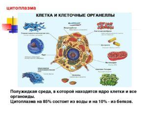 цитоплазма Полужидкая среда, в которой находятся ядро клетки и все органоиды.