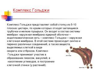 Комплекс Гольджи Комплекс Гольджи представляет собой стопку из 5-10 плоских
