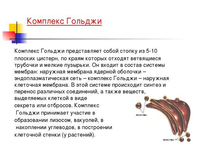 Комплекс Гольджи Комплекс Гольджи представляет собой стопку из 5-10 плоских...