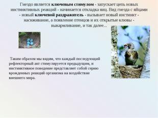 Гнездо является ключевым стимулом - запускает цепь новых инстинктивных реакци