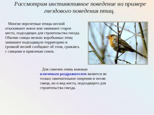 Рассмотрим инстинктивное поведение на примере гнездового поведения птиц. Мног