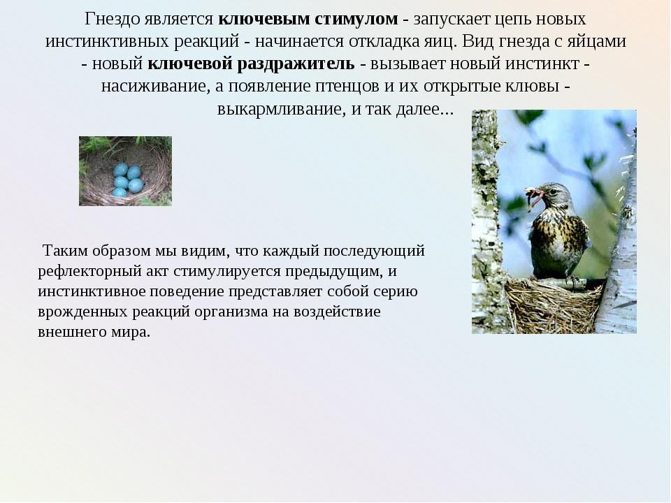 Гнездо является ключевым стимулом - запускает цепь новых инстинктивных реакци...