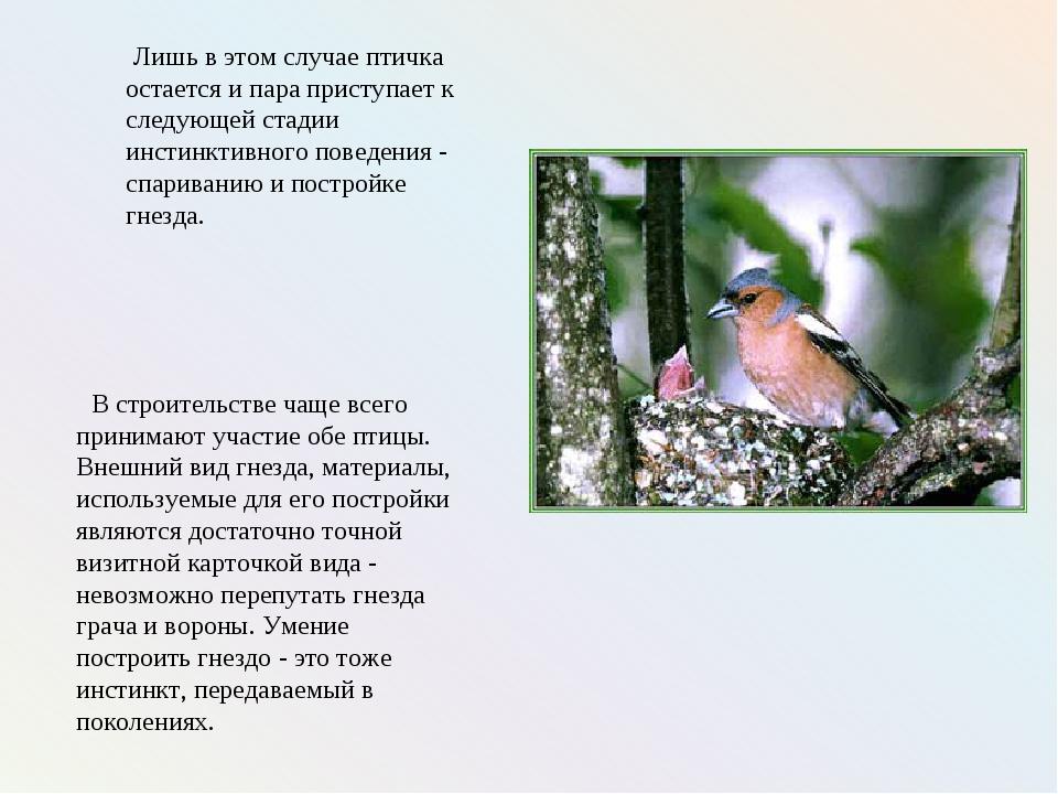 Лишь в этом случае птичка остается и пара приступает к следующей стадии инст...