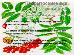 Покрытосеменные растения: 1.Имеют орган семенного размножения – цветок. 2.Пос