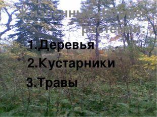 Жизненные формы растений: 1.Деревья 2.Кустарники 3.Травы
