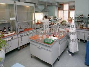Лабораторная работа Изучение строения семян растений