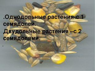 .Однодольные растения-с 1 семядолей. Двудольные растения –с 2 семядолями. .